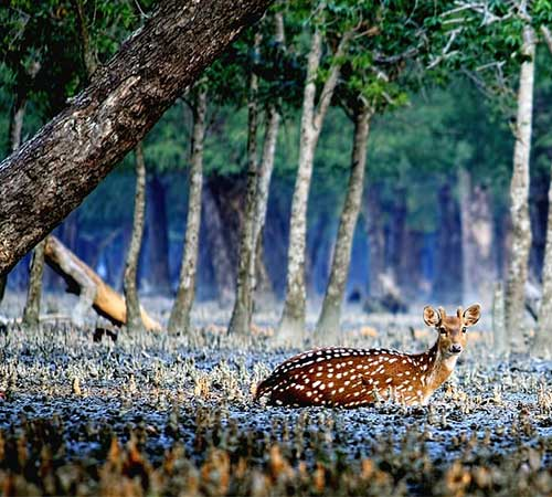 Sundarban Tour 3 Days 2 Night